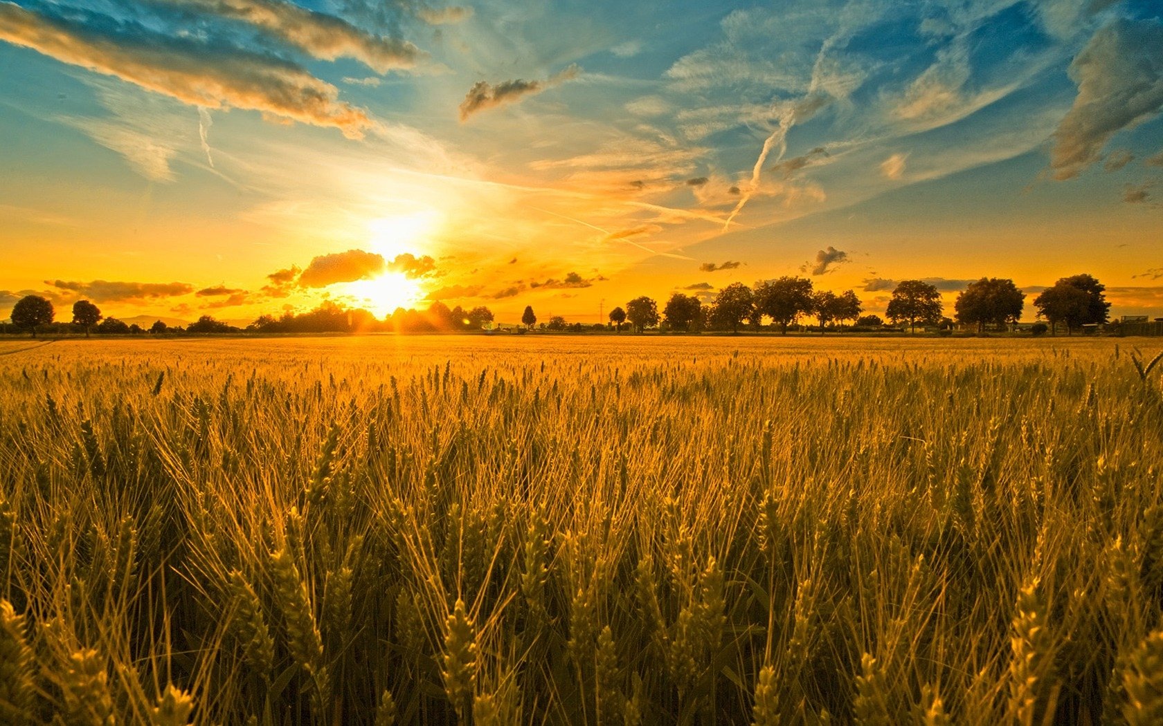 Preparing for Sunday: The Harvest