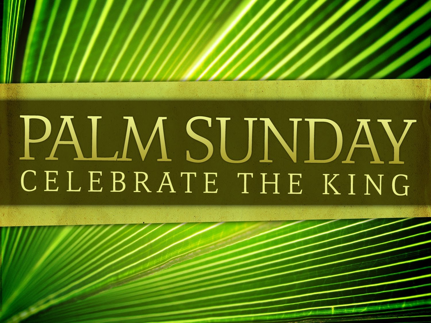 Preparing for Sunday: The Triumphal Entry